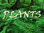 plants