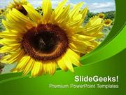 AGRICULTURE BACKGROUND TEMPLATE WITH SUNFLOWER PPT TEMPLATE