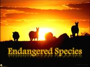 Ecology: Endangered Species Presentation