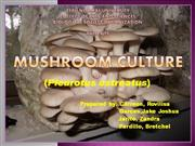 Mushroom Culture Procedures