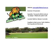 Sir Walter Lawn Turf in Perth, Baldivis, Canningvale, Mandurah in WA