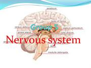 group 5 nervous system