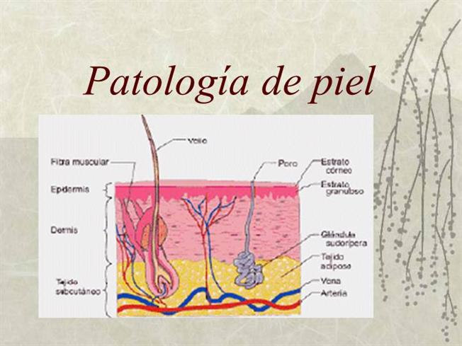 Anatomia Patologica de la Piel |authorSTREAM
