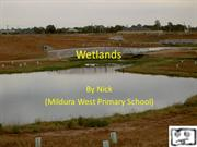 Nick Wetlands