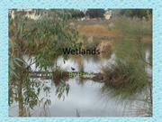 Wetlands by Harry