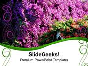 VACATION BOUGAINVILLEA PINK FLOWERS BEAUTY PPT TEMPLATE