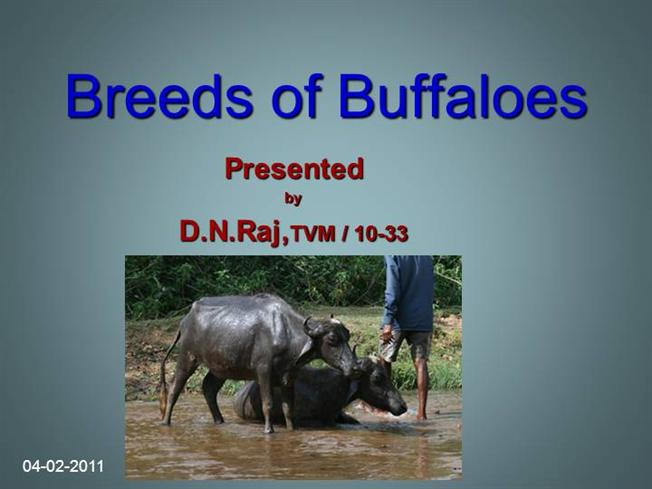 Buffalo Breeds Ppt |authorSTREAM