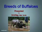 Buffalo breeds.ppt
