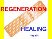 Tissue repair and renewal