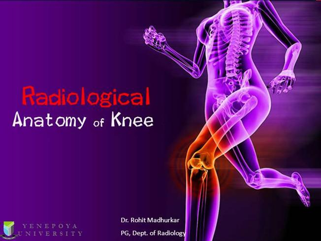 Knee Anatomy |authorSTREAM