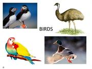 Birds for year 1