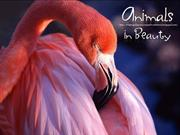 Animals in Beauty (11)