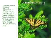 A Lesson from A Butterfly