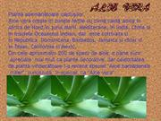 www.power-point.ro_639_ALOE VERA