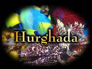 39 Hurghada - Red Sea by Katerina(ak85ka)