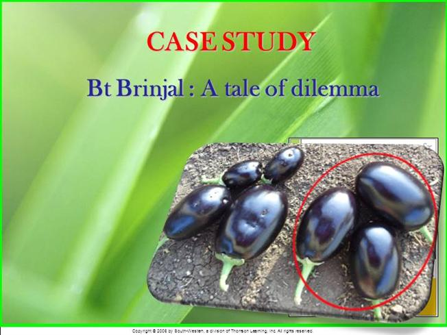 case study bt brinjal ppt