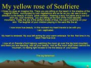 My yellow rose of Soufriere