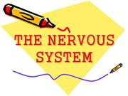 THE NERVOUS SYSTEM (1)