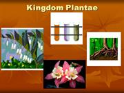 Plantae Kingdom