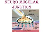 NEURO-MUCULAR JUNCTION ECC