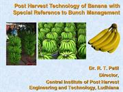 banana bunch management