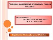 surgical management of mammary tumour in canines