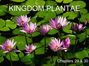 Kingdom_Plantae