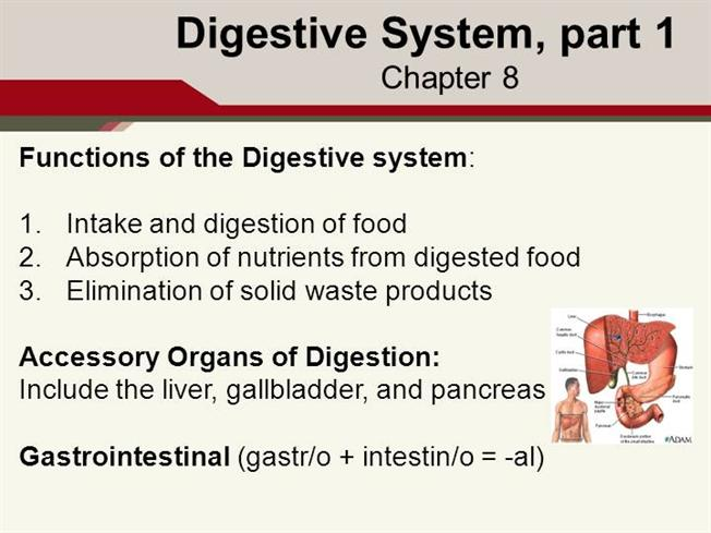 Digestive System Part 11susan Authorstream