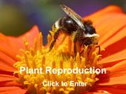 plant-reproduction