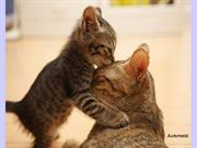Animals Mother's Love (Nikos)