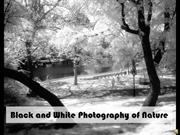 99022 Black and White Photography of Nature