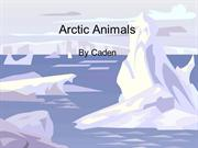 Arctic Animals caden