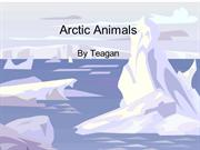 Arctic Animals.pptteagan