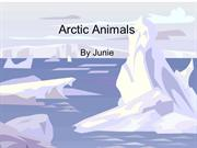 Arctic AnimalsJunie
