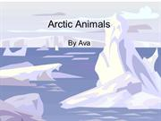 Arctic Animals Ava