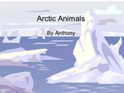 Arctic Animals Anthony