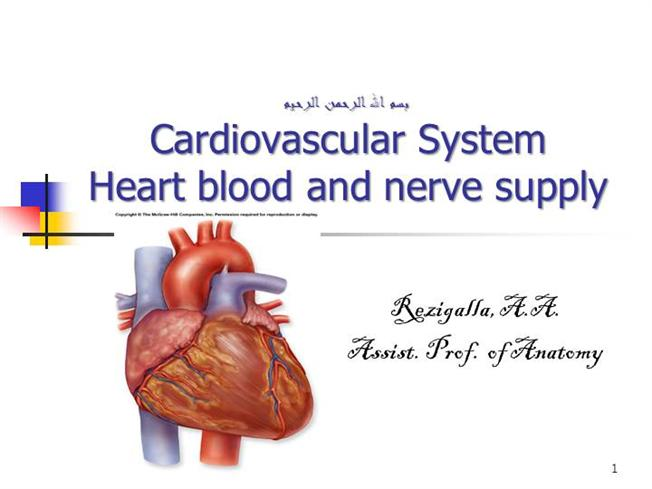 Blood & Nerve Supply of Heart |authorSTREAM