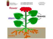 2. Parts of the plants