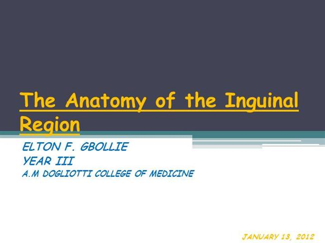 The Anatomy Of The Inguinal Region Authorstream