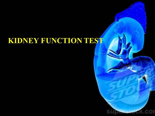 Kidney function test authorstream toneelgroepblik Choice Image