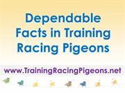 Dependable Facts in Training Racing Pigeons