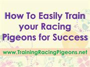 How To Easily Train your Racing Pigeons for Success