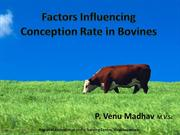 Factors Influencing Conception Rate in Cows