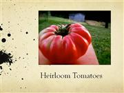 Heirloom Tomato Research