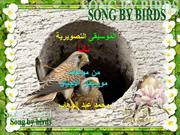 SONG BY BIRDS