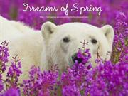 Dreams of Spring (5)