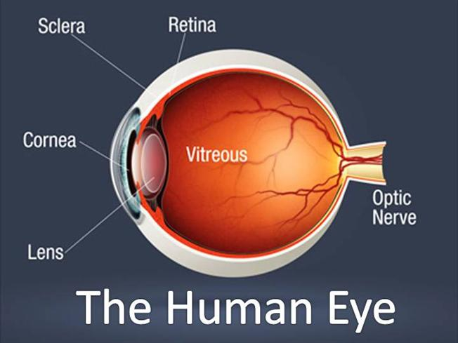 The Human Eye Authorstream