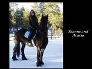 The Elevation Friesians Family