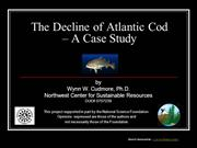 The Decline of the Atlantic Cod in New England