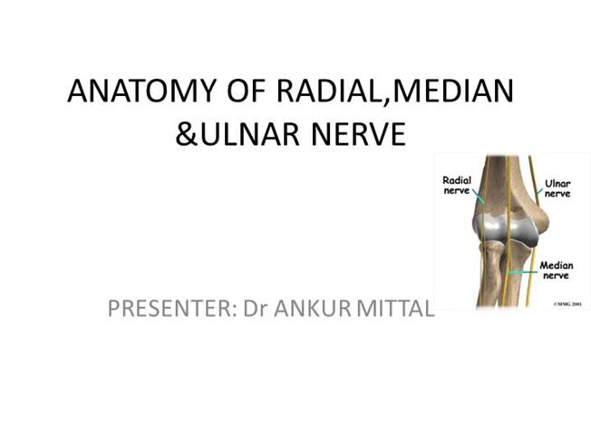 Anatomy Of Radial Median And Ulanar Nerve Authorstream